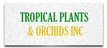 Tropical Plants & Orchids Inc